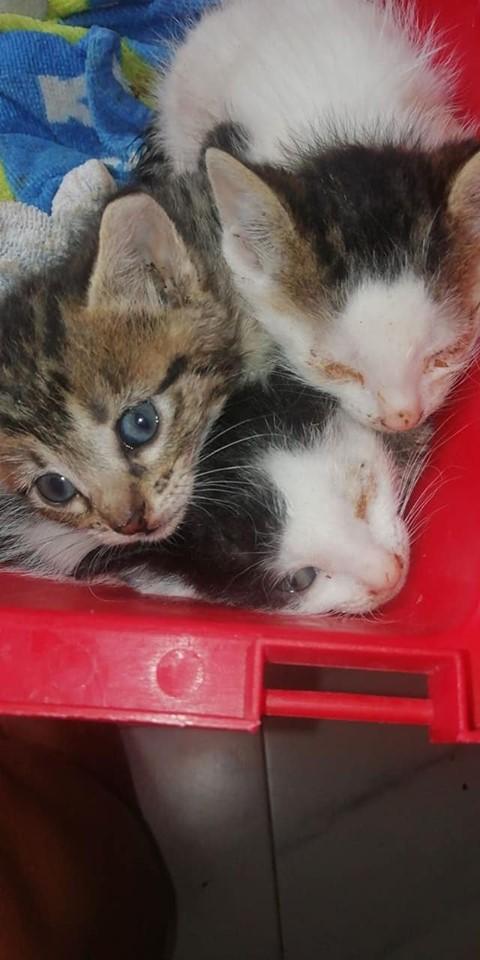 Paralysed kitten and brothers